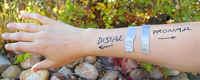 What Do Distal and Proximal Mean? - The Survival Doctor