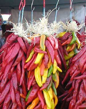 Hot peppers hang at the Chile Frijoles Festival in Pueblo, CO. Dried, peppers maintain some of their medicinal powers.